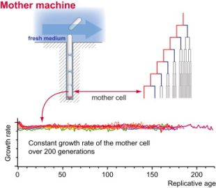 Mother Machine Graphical Abstract